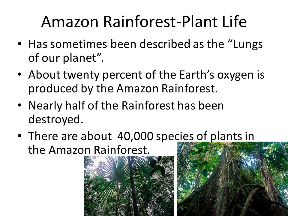 "Amazon Rainforest-Plant Life Has sometimes been described as the ""Lungs of our planet"". About twenty percent of the Earth's oxygen is produced by the"