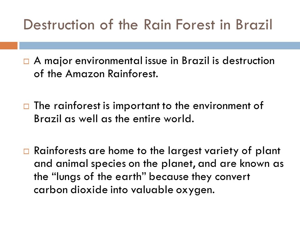 Destruction of the Rain Forest in Brazil  A major environmental issue in Brazil is destruction of the Amazon Rainforest.  The rainforest is importan