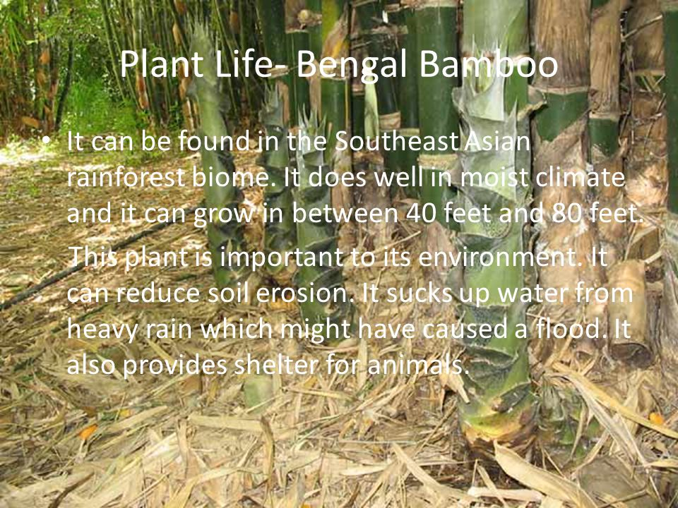 Plant Life: Bromeliads It is a waxy plant that is related to the pineapple family.