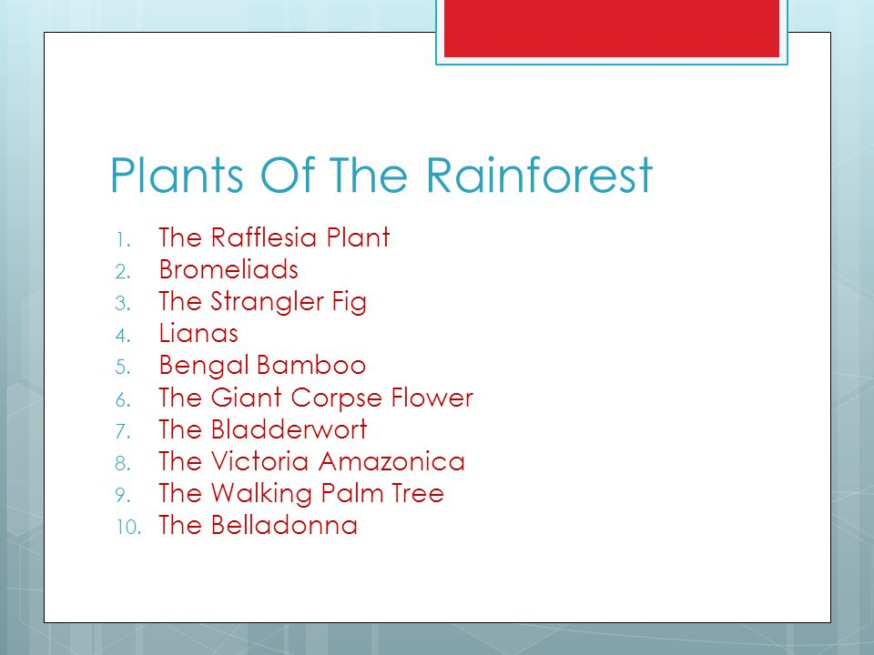 Plants Of The Rainforest 1. The Rafflesia Plant 2. Bromeliads 3. The Strangler Fig 4. Lianas 5. Bengal Bamboo 6. The Giant Corpse Flower 7. The Bladde