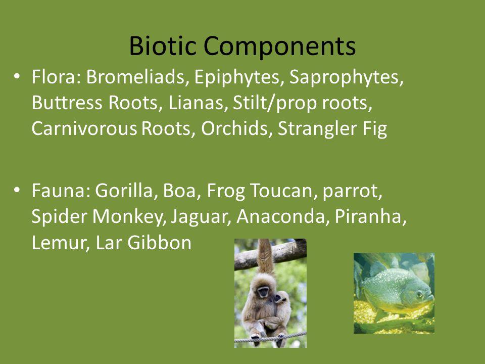 Biotic Components Flora: Bromeliads, Epiphytes, Saprophytes, Buttress Roots, Lianas, Stilt/prop roots, Carnivorous Roots, Orchids, Strangler Fig Fauna: Gorilla, Boa, Frog Toucan, parrot, Spider Monkey, Jaguar, Anaconda, Piranha, Lemur, Lar Gibbon