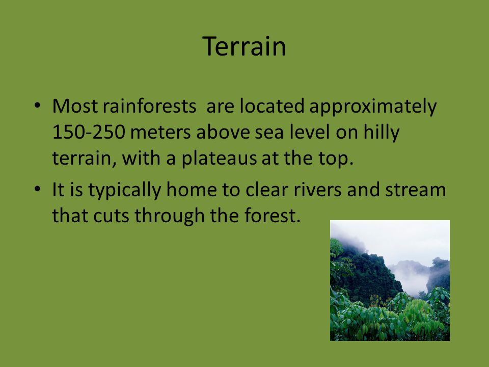 Terrain Most rainforests are located approximately 150-250 meters above sea level on hilly terrain, with a plateaus at the top.