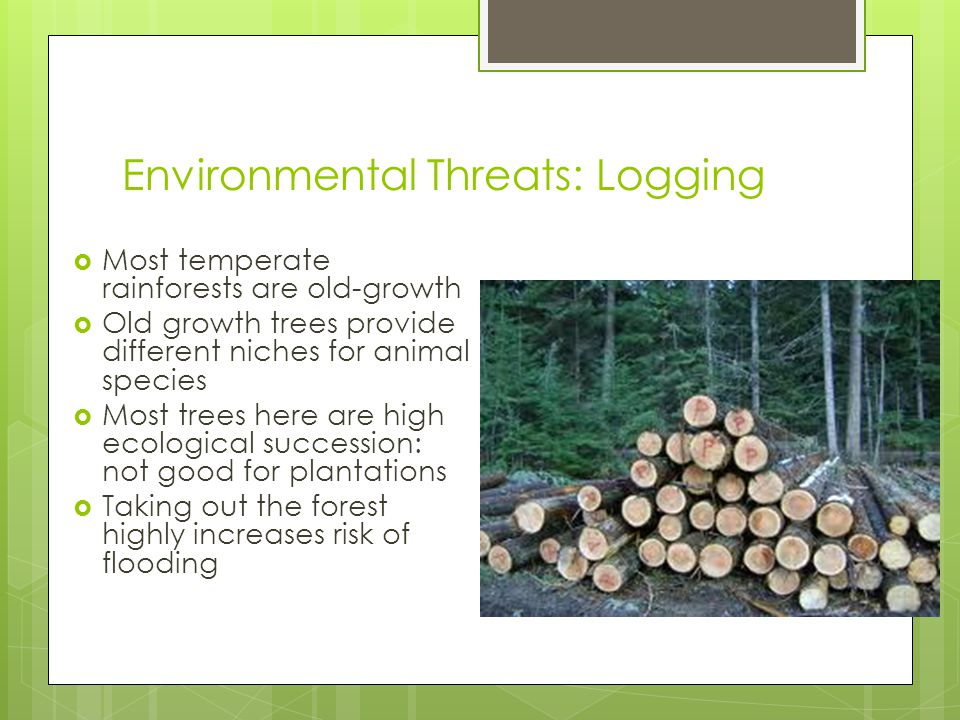 Environmental Threats: Logging  Most temperate rainforests are old-growth  Old growth trees provide different niches for animal species  Most trees here are high ecological succession: not good for plantations  Taking out the forest highly increases risk of flooding