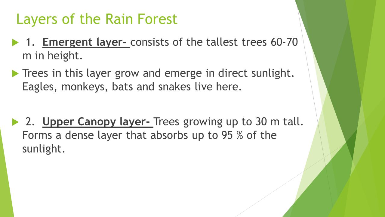 Layers of the Rain Forest  1.Emergent layer- consists of the tallest trees 60-70 m in height.