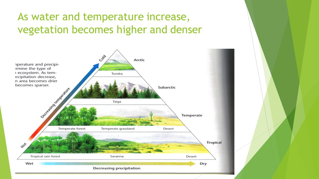 As water and temperature increase, vegetation becomes higher and denser