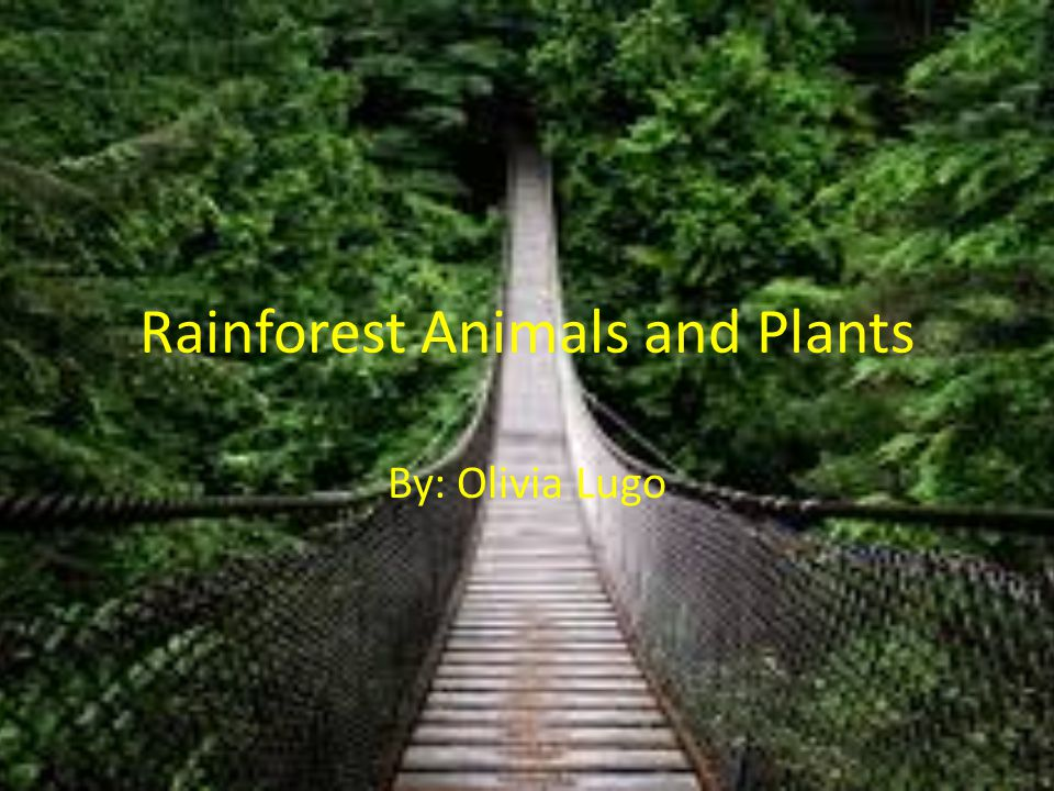 Rainforest Animals and Plants By: Olivia Lugo