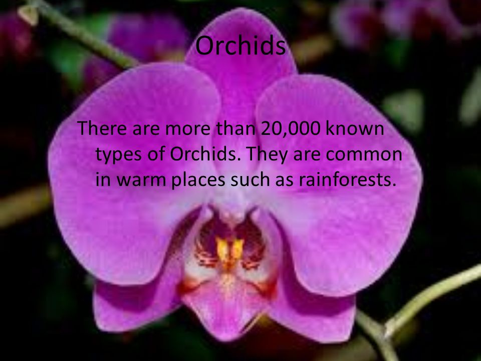 Orchids There are more than 20,000 known types of Orchids.