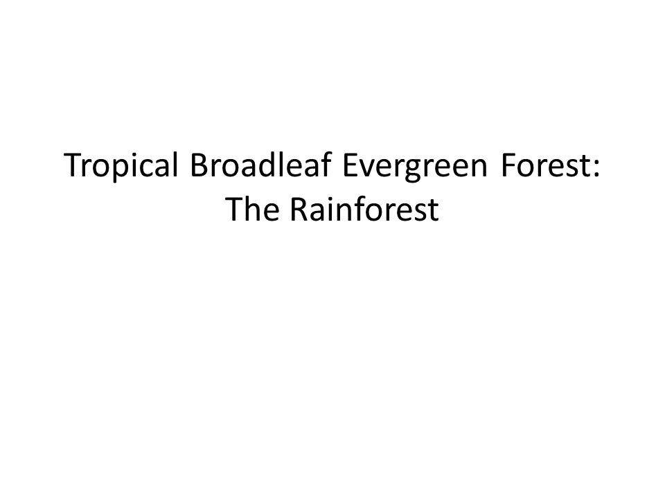 Tropical Broadleaf Evergreen Forest: The Rainforest