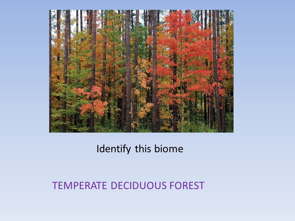 Which biome is characterized by long, cold winters.