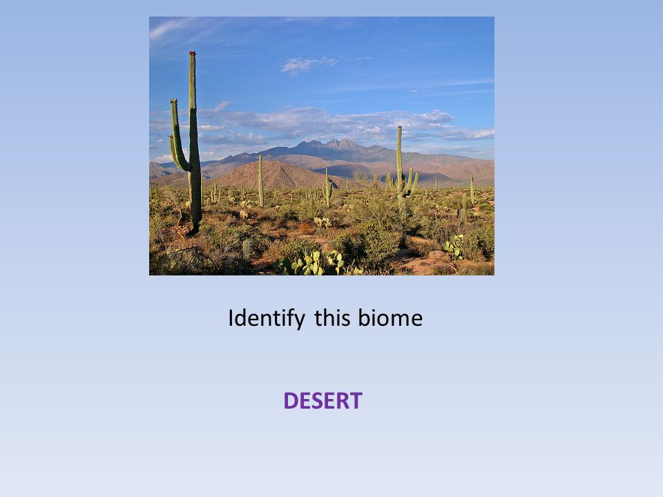 Which biome has plants that include cacti, deeply rooted shrubs and herbs that are able to grow quickly during infrequent moist periods.