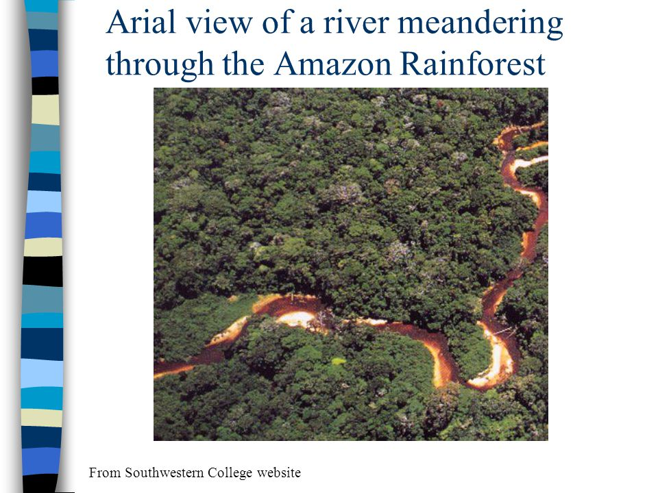 Arial view of a river meandering through the Amazon Rainforest From Southwestern College website