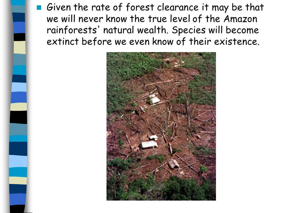 Given the rate of forest clearance it may be that we will never know the true level of the Amazon rainforests natural wealth.