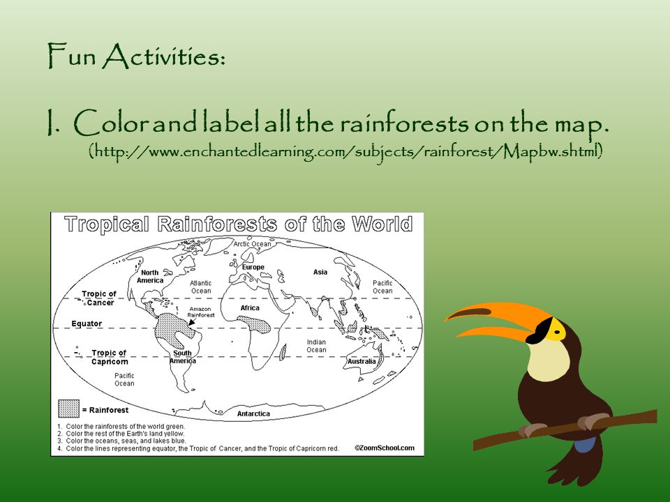 Fun Activities: I.Color and label all the rainforests on the map.