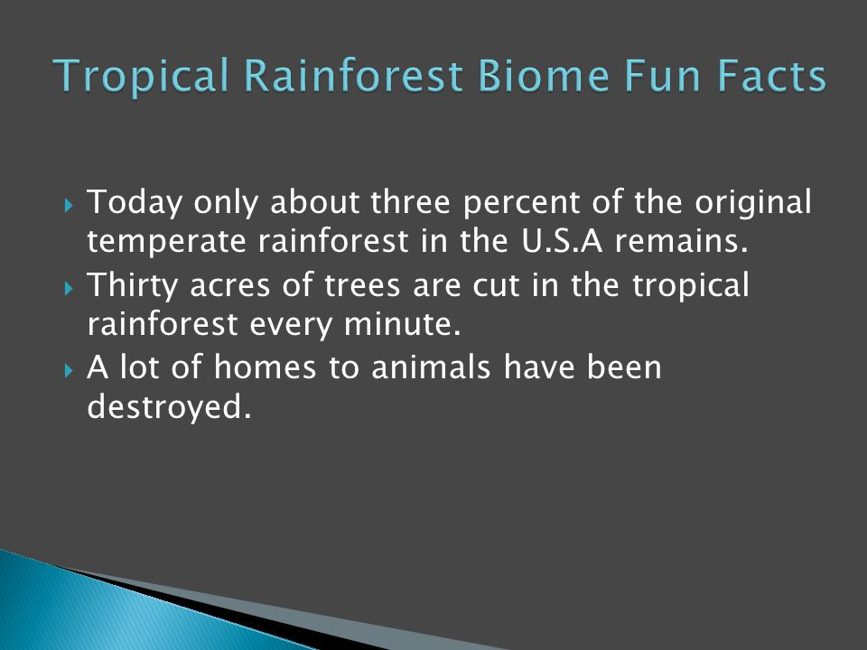  Today only about three percent of the original temperate rainforest in the U.S.A remains.