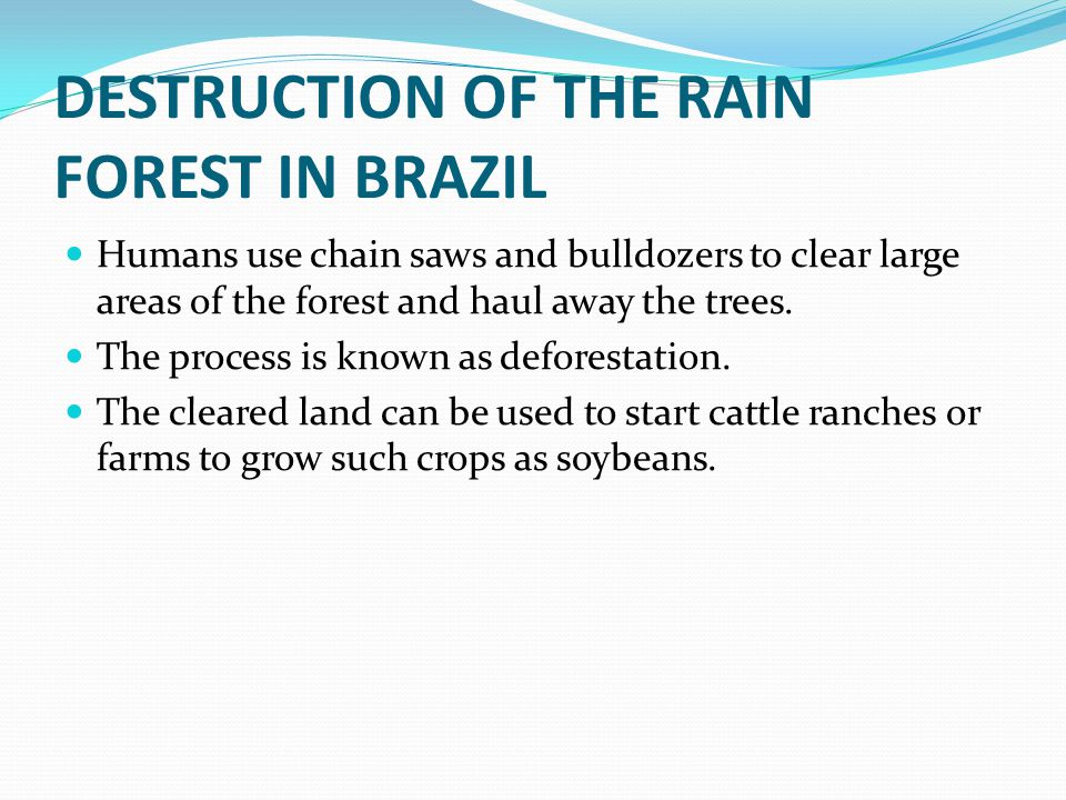 DESTRUCTION OF THE RAIN FOREST IN BRAZIL Humans use chain saws and bulldozers to clear large areas of the forest and haul away the trees.