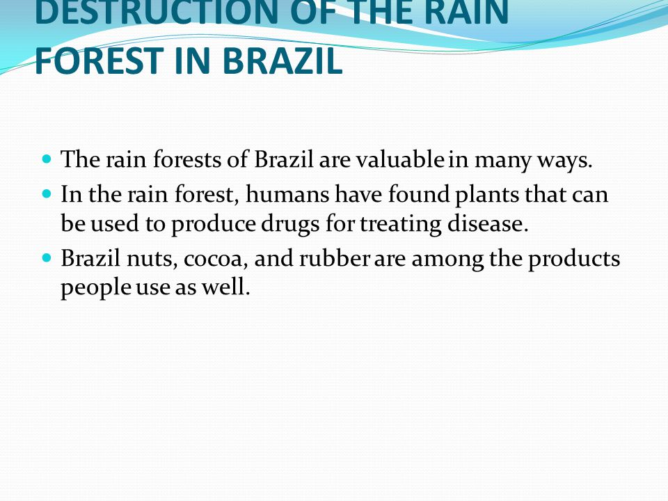 DESTRUCTION OF THE RAIN FOREST IN BRAZIL The rain forests of Brazil are valuable in many ways.