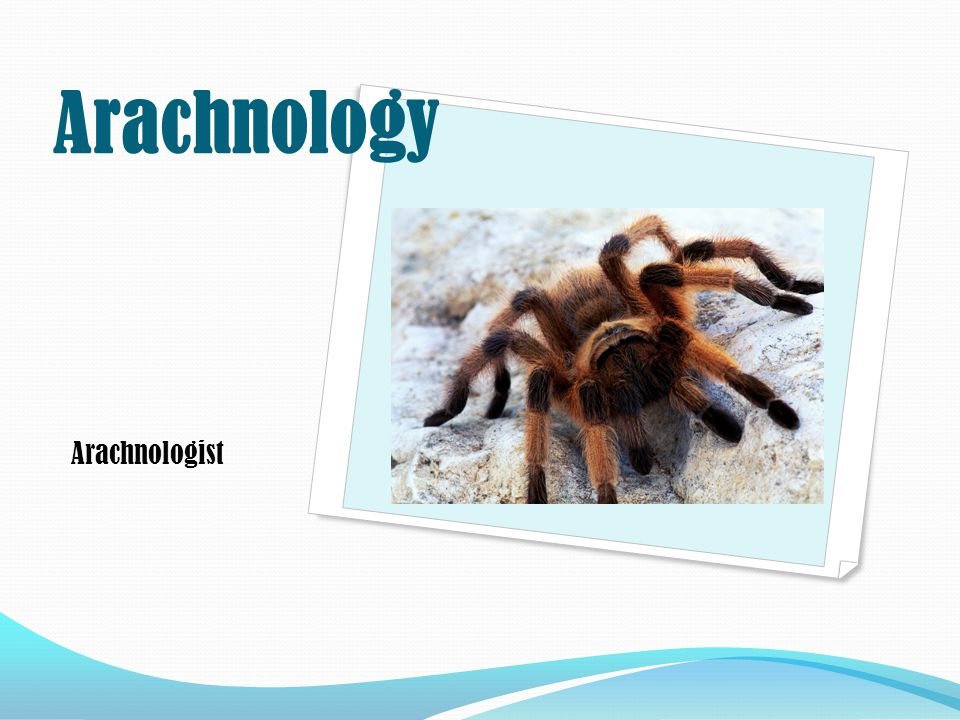 Arachnologist Arachnology