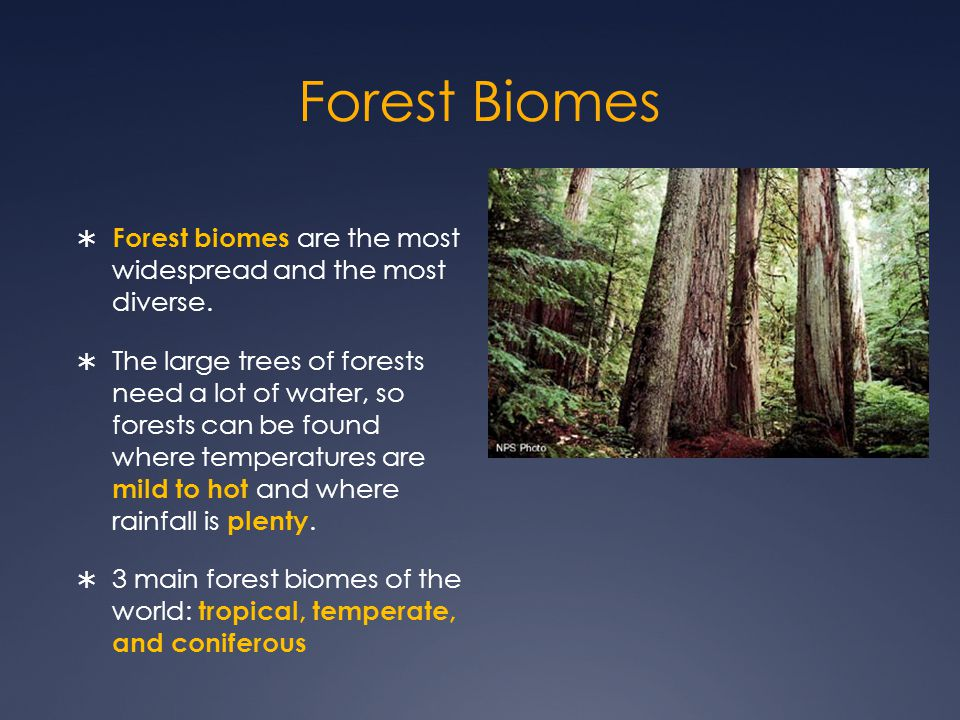 Forest Biomes  Forest biomes are the most widespread and the most diverse.