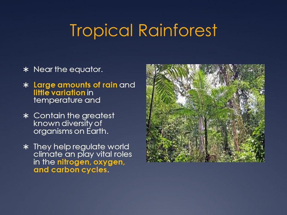 Tropical Rainforest  Near the equator.
