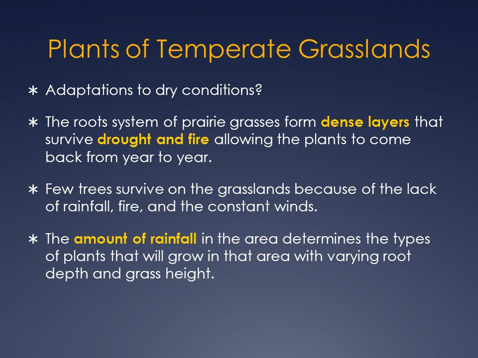 Plants of Temperate Grasslands  Adaptations to dry conditions.