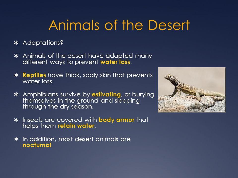 Animals of the Desert  Adaptations.