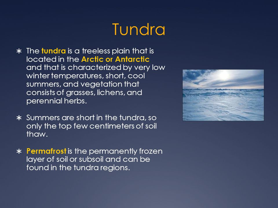 Tundra  The tundra is a treeless plain that is located in the Arctic or Antarctic and that is characterized by very low winter temperatures, short, cool summers, and vegetation that consists of grasses, lichens, and perennial herbs.