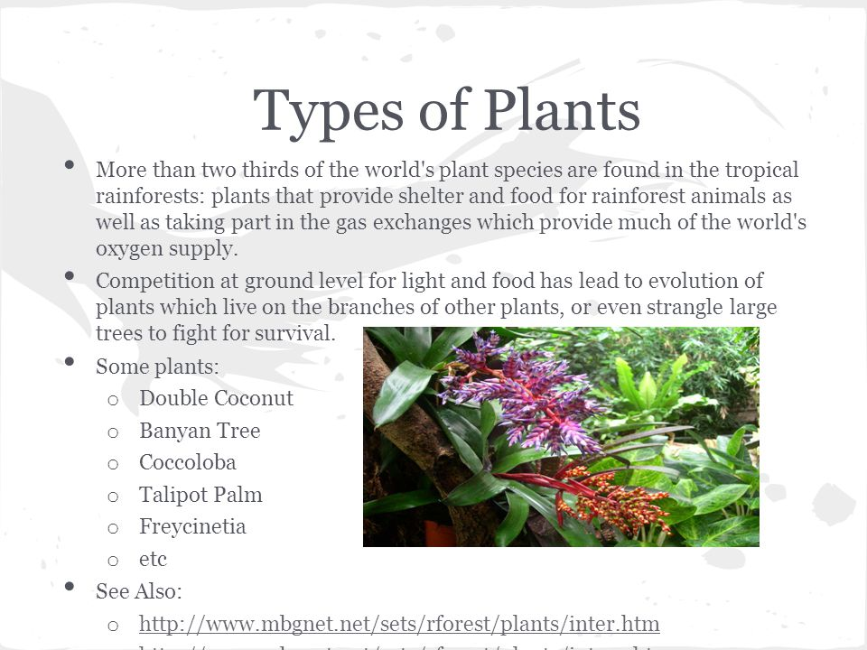 Types of Plants More than two thirds of the world s plant species are found in the tropical rainforests: plants that provide shelter and food for rainforest animals as well as taking part in the gas exchanges which provide much of the world s oxygen supply.