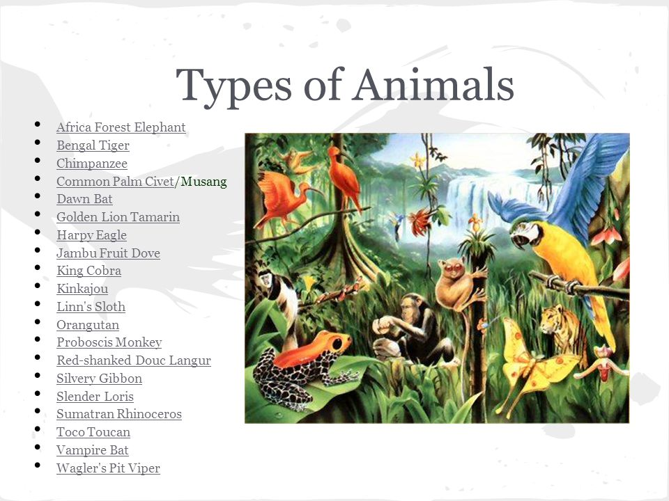 Types of Animals Africa Forest Elephant Bengal Tiger Chimpanzee Common Palm Civet/Musang Common Palm Civet Dawn Bat Golden Lion Tamarin Harpy Eagle Jambu Fruit Dove King Cobra Kinkajou Linn s Sloth Orangutan Proboscis Monkey Red-shanked Douc Langur Silvery Gibbon Slender Loris Sumatran Rhinoceros Toco Toucan Vampire Bat Wagler s Pit Viper