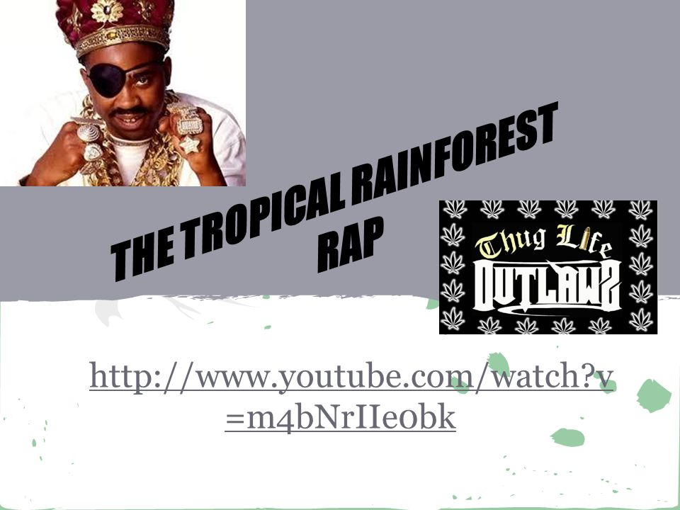 http://www.youtube.com/watch v =m4bNrIIe0bk THE TROPICAL RAINFOREST RAP