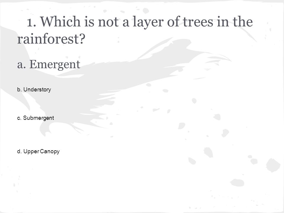 1. Which is not a layer of trees in the rainforest.
