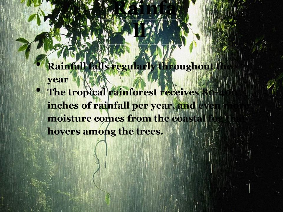 Rainfa ll Rainfall falls regularly throughout the year The tropical rainforest receives 80-400 inches of rainfall per year, and even more moisture com