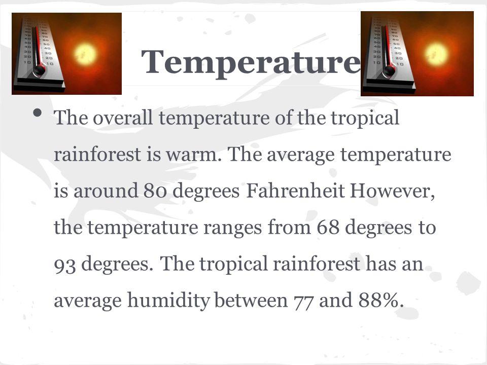 Temperature The overall temperature of the tropical rainforest is warm. The average temperature is around 80 degrees Fahrenheit However, the temperatu