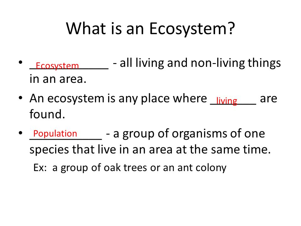 Water Ecosystems 1.___________ 2.___________ 3.___________ 4.___________ Water ecosystems include animals that spend much of their time on land.