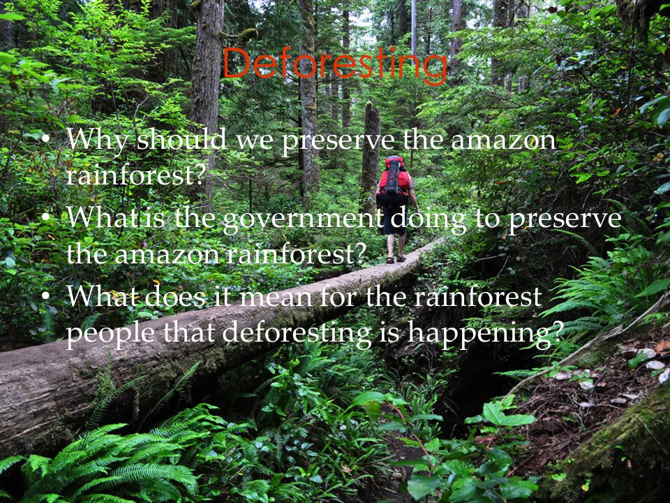 Deforesting Why should we preserve the amazon rainforest.