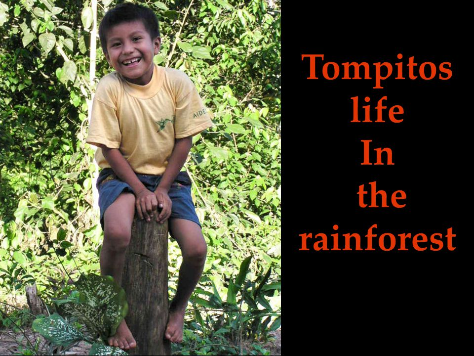 Tompitos life In the rainforest