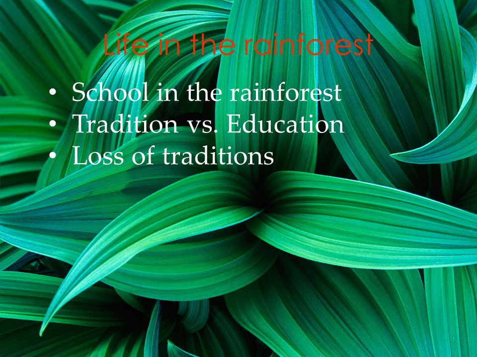 Life in the rainforest School in the rainforest Tradition vs. Education Loss of traditions