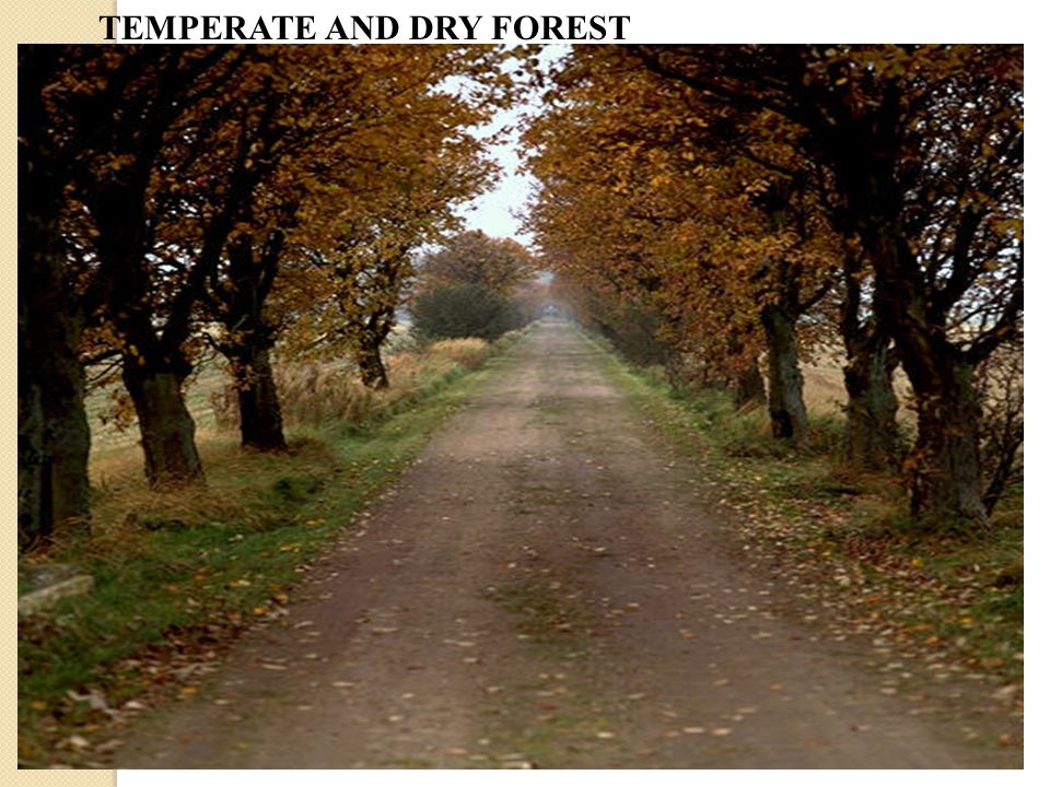 TEMPERATE AND DRY FOREST