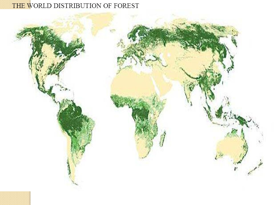 THE WORLD DISTRIBUTION OF FOREST