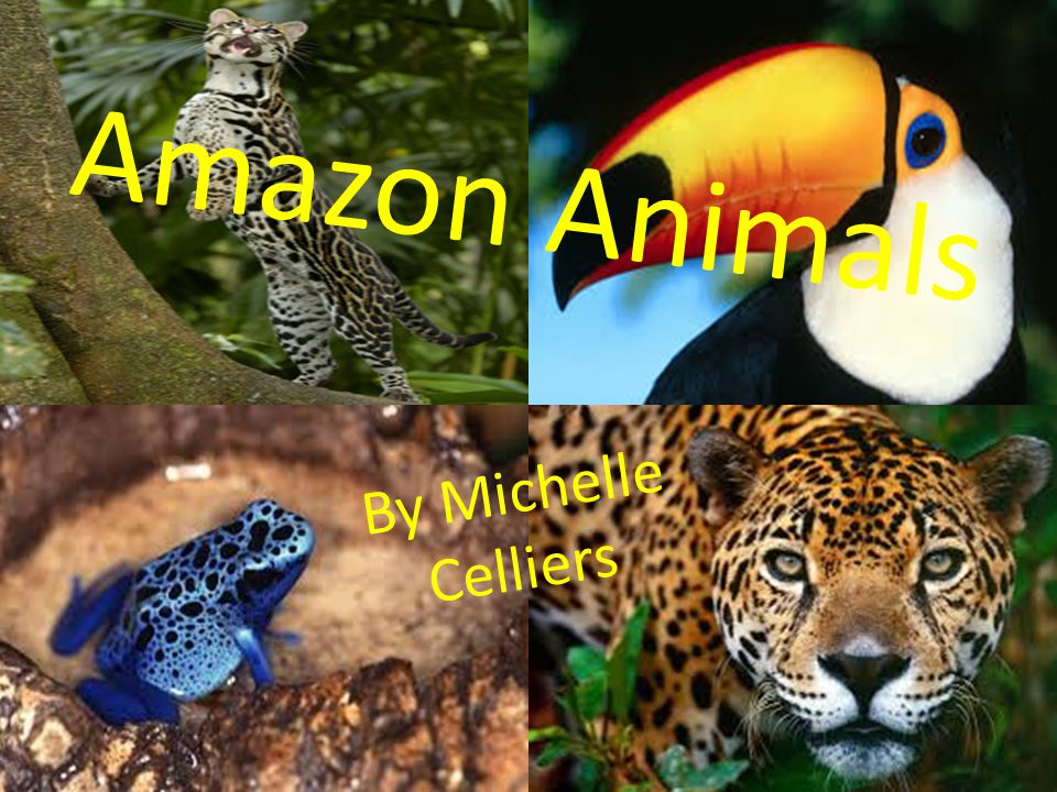 Amazon Animals By Michelle Celliers