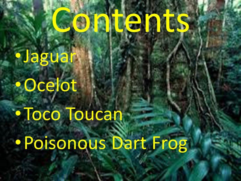 Contents Jaguar Ocelot Toco Toucan Poisonous Dart Frog