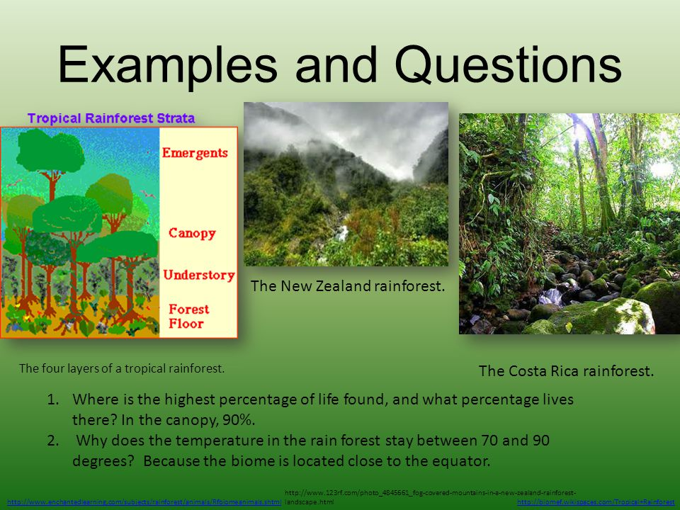 Examples and Questions http://www.enchantedlearning.com/subjects/rainforest/animals/Rfbiomeanimals.shtml The four layers of a tropical rainforest. htt