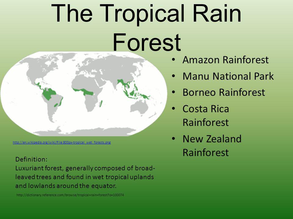 The Tropical Rain Forest Amazon Rainforest Manu National Park Borneo Rainforest Costa Rica Rainforest New Zealand Rainforest http://en.wikipedia.org/w