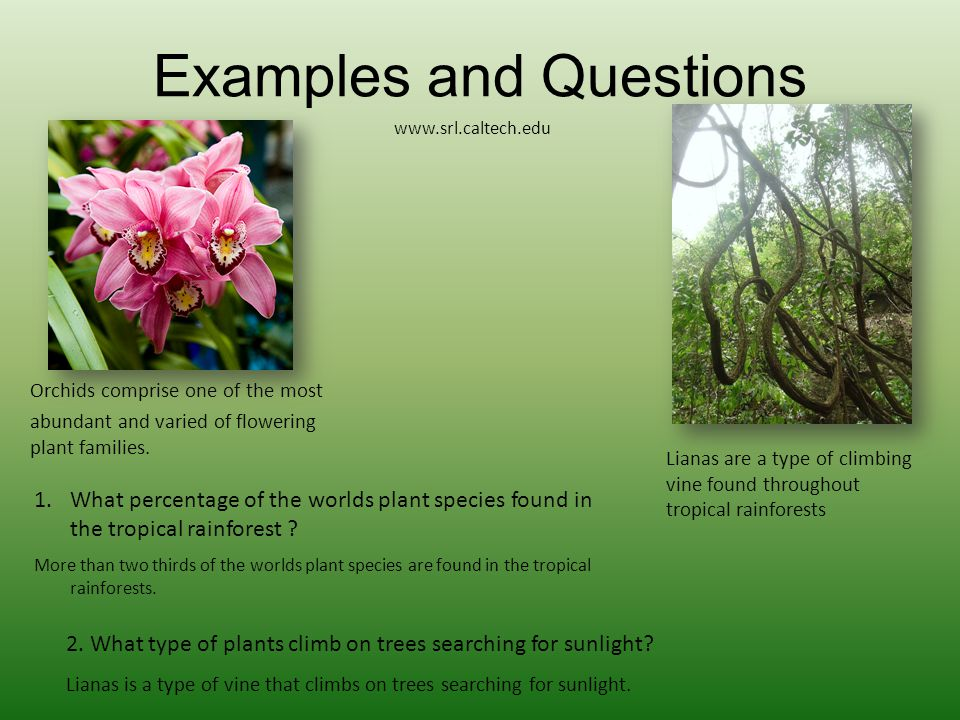 Examples and Questions Orchids comprise one of the most abundant and varied of flowering plant families. 1.What percentage of the worlds plant species