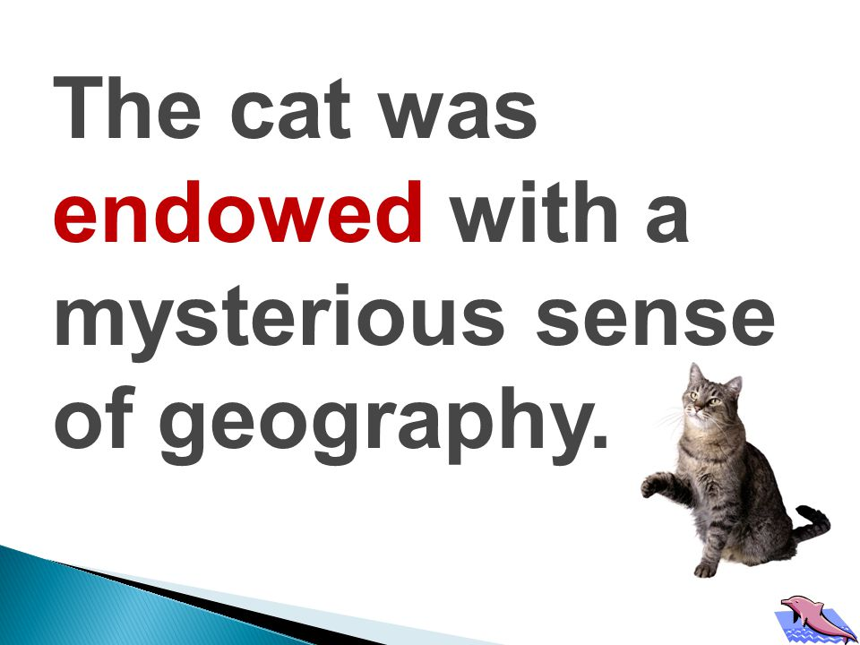The cat was endowed with a mysterious sense of geography.