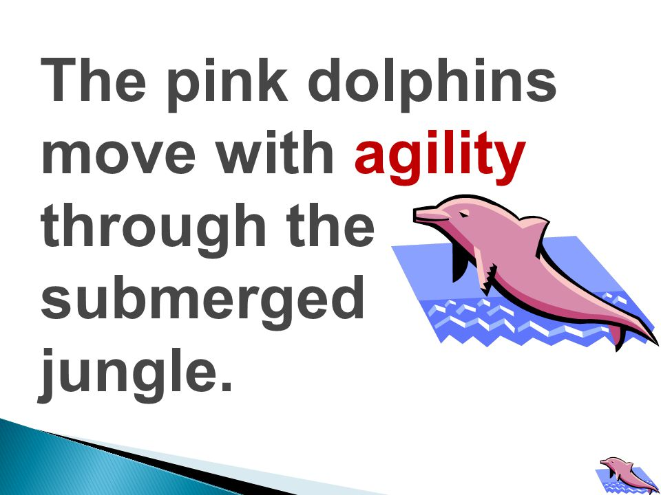 The pink dolphins move with agility through the submerged jungle.