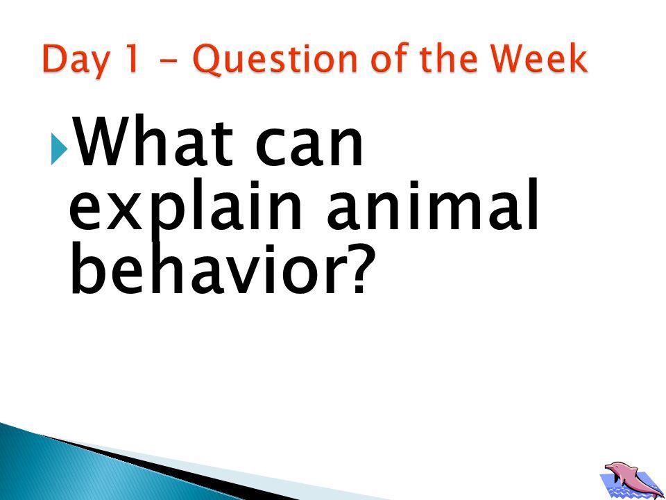  What can explain animal behavior?