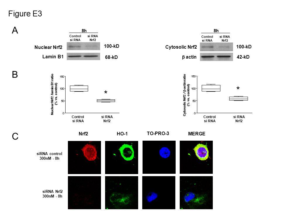 Figure E3 * Cytosolic Nrf2  -actin ratio (% vs.