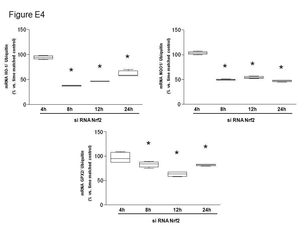 * * * * * * 4h8h12h24h si RNA Nrf2 4h8h12h24h si RNA Nrf2 * * * 4h8h12h24h si RNA Nrf2 Figure E4 mRNA HO-1/ Ubiquitin (% vs.