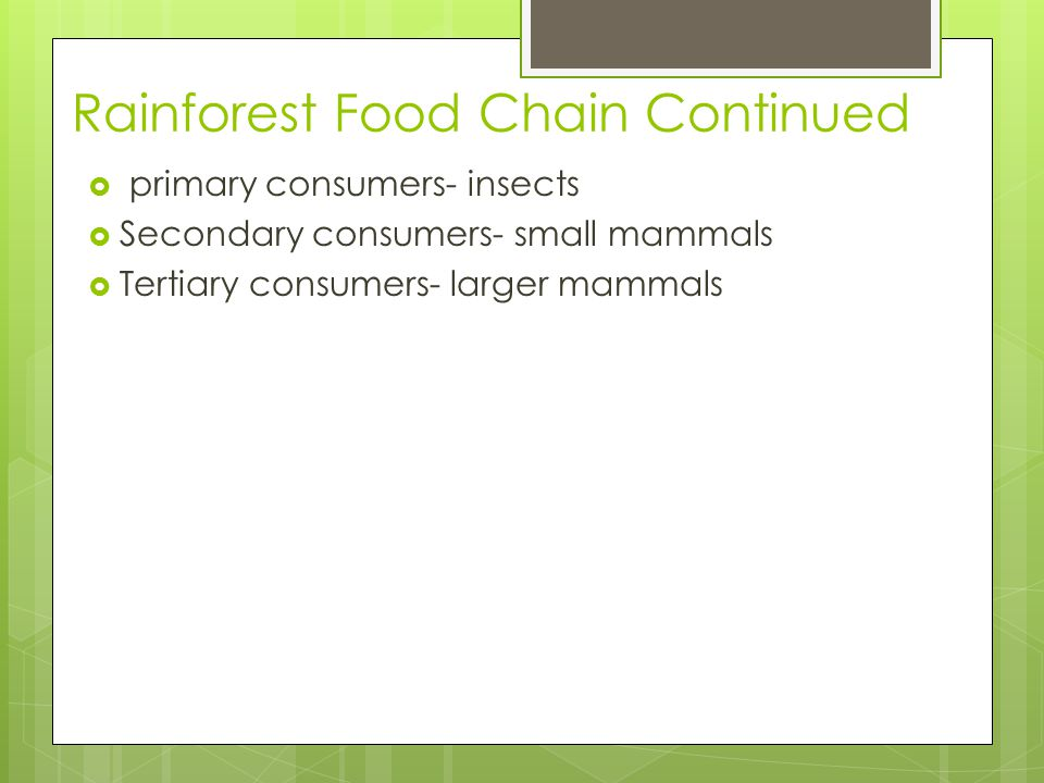 Rainforest Food Chain Continued  primary consumers- insects  Secondary consumers- small mammals  Tertiary consumers- larger mammals