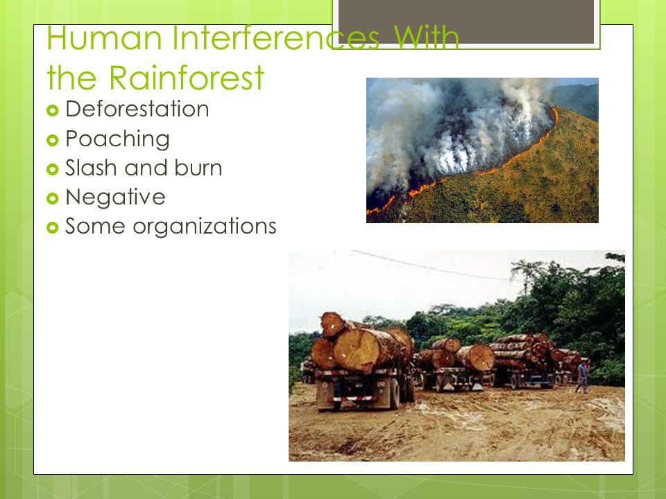 Human Interferences With the Rainforest  Deforestation  Poaching  Slash and burn  Negative  Some organizations